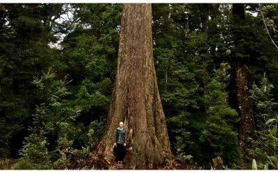 Tree Lessons