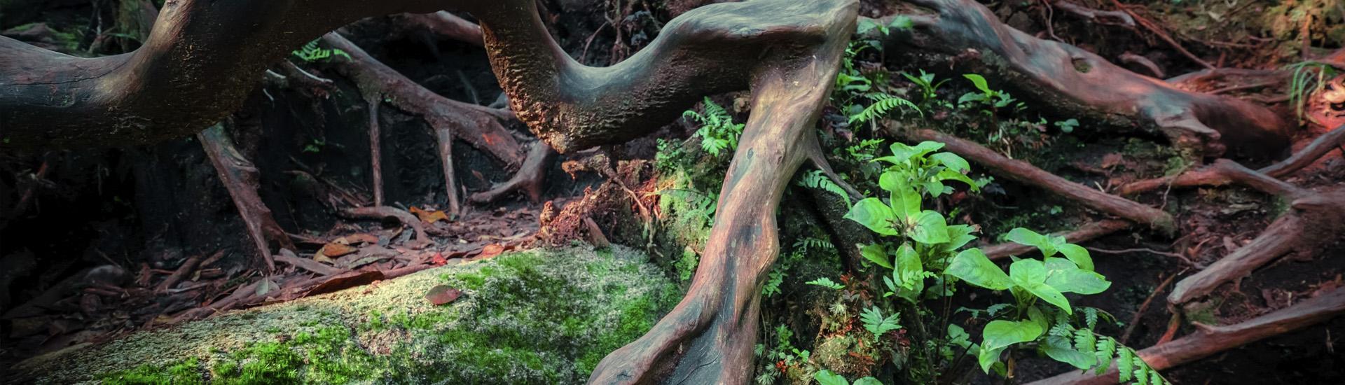 root membership