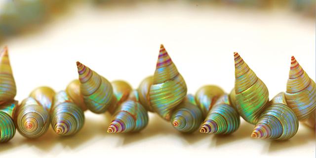 Tasmania Shells