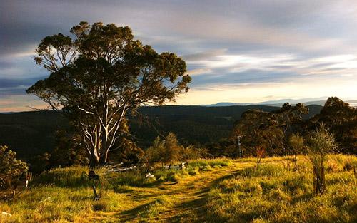 Tasmania-Tree-stormy-sky