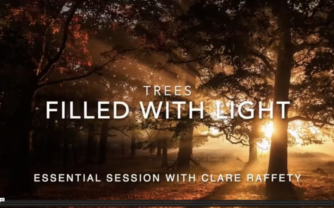 Series inspired by trees: Filled with Light. Essential