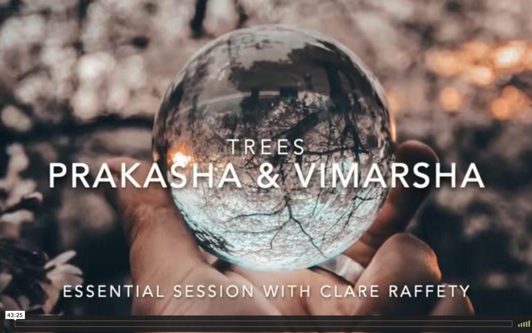 Series inspired by trees: Prakasha & Vimarsha. Essential