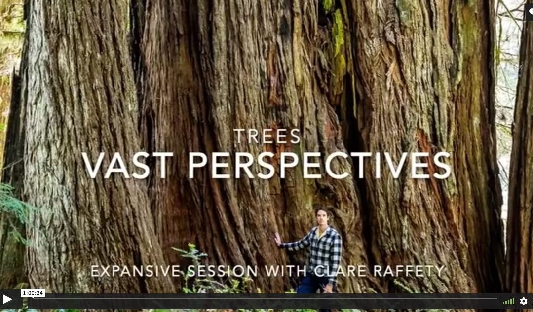 Series inspired by trees: Vast perspectives. Expansive