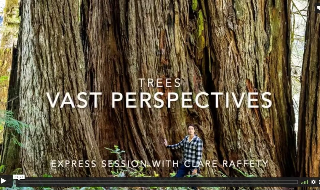 Series inspired by trees: Vast perspectives. Express