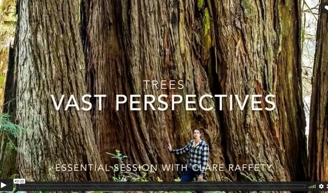 Series inspired by trees: Vast perspectives. Essential