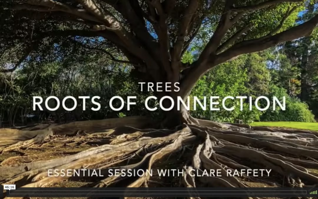 Series inspired by trees: Roots of Connection. Essential